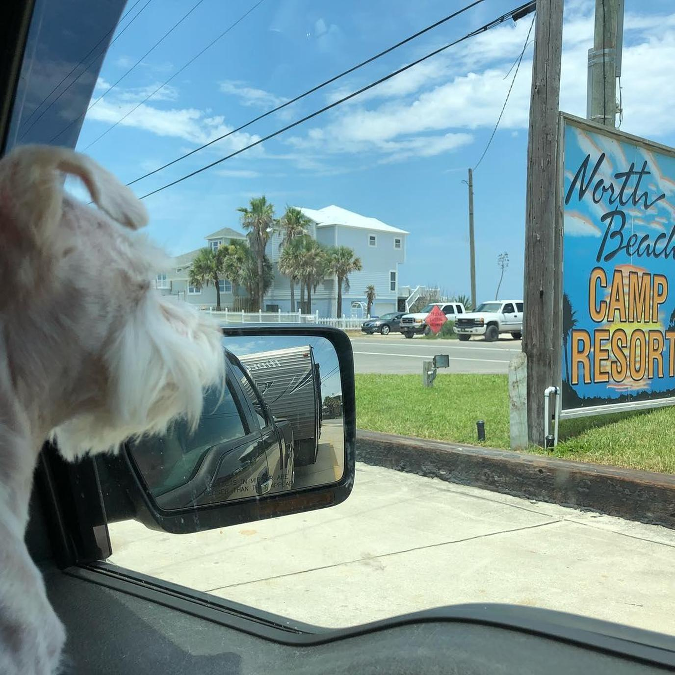 A dog drives up to North Beach Camp Resort in Saint Augustine.