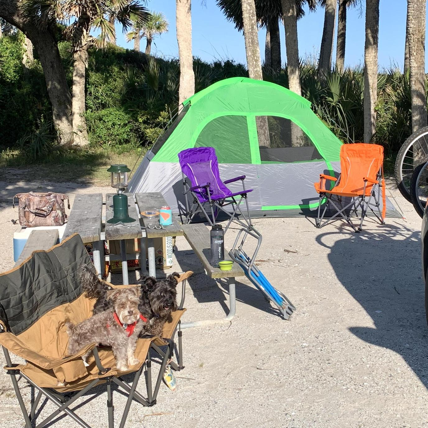 Two Dogs Camp on the Beach at a Pet-Friendly Oceanfront Campground on Edisto Beach.
