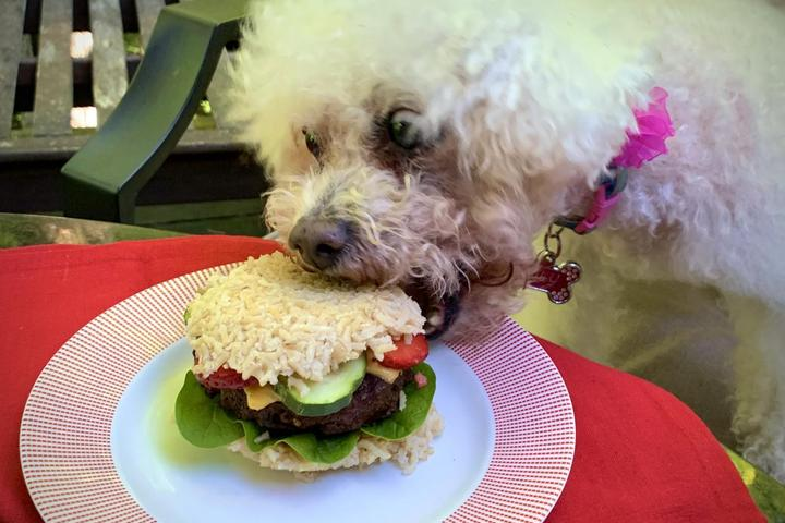 White dog Chomps on a Burger