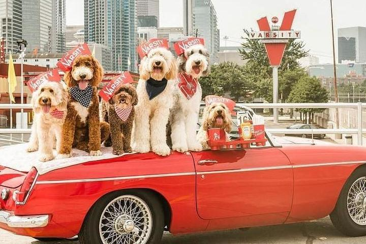 A car full of dogs at The Varsity, a pet-friendly drive-in restaurant.