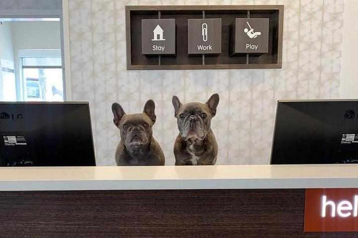 Two dogs stand ready to welcome guests to a pet-friendly hotel.
