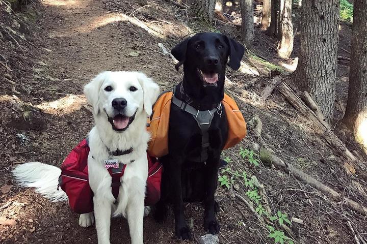 Two Dogs Wear the Ruffwear Approach Dog Pack.