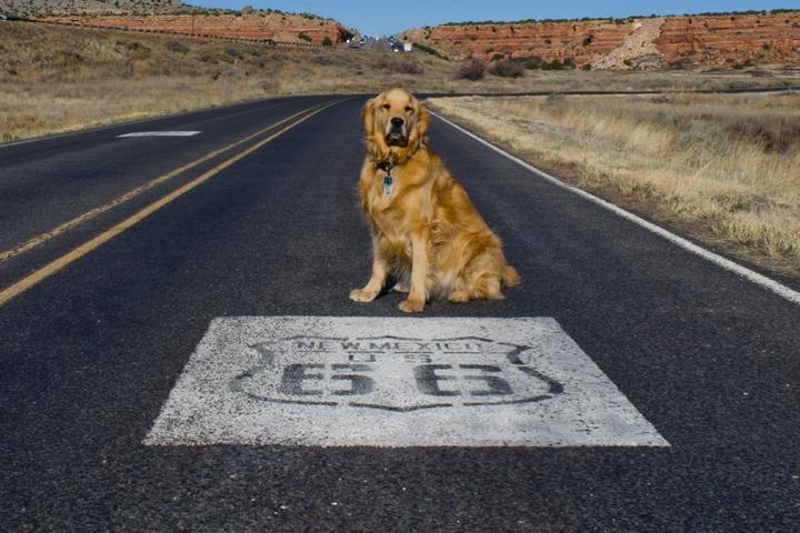 A pet-friendly road trip along Route 66