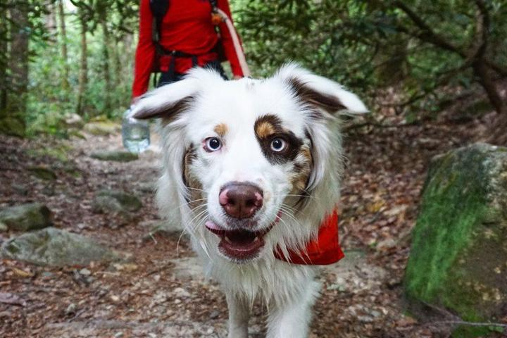 10 Summer Hikes That Will Leave Fido Panting For More