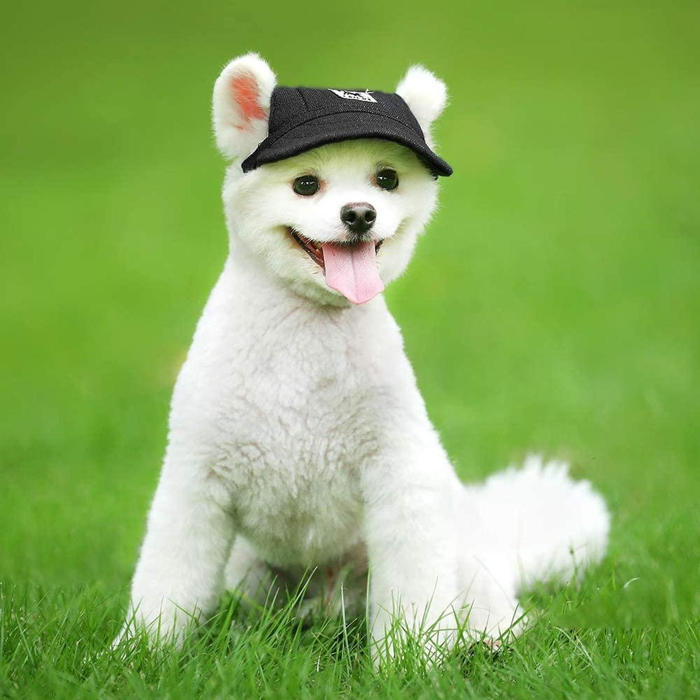 A dog wears her dog hat while playing outside.