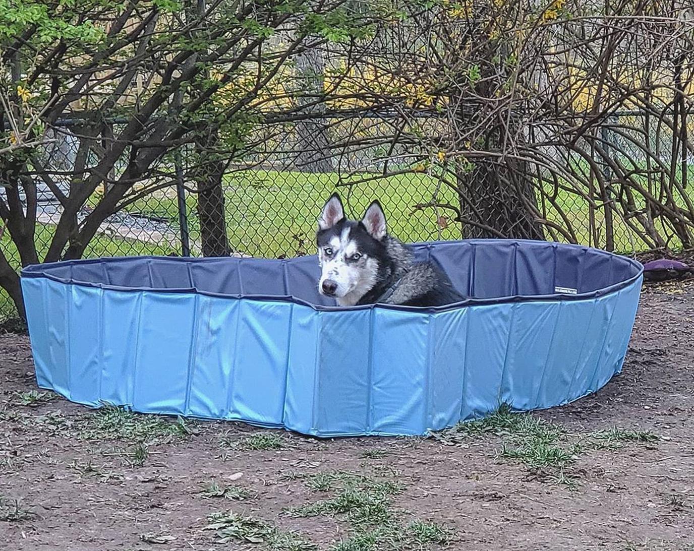 A Husky enjoys his dog pool.