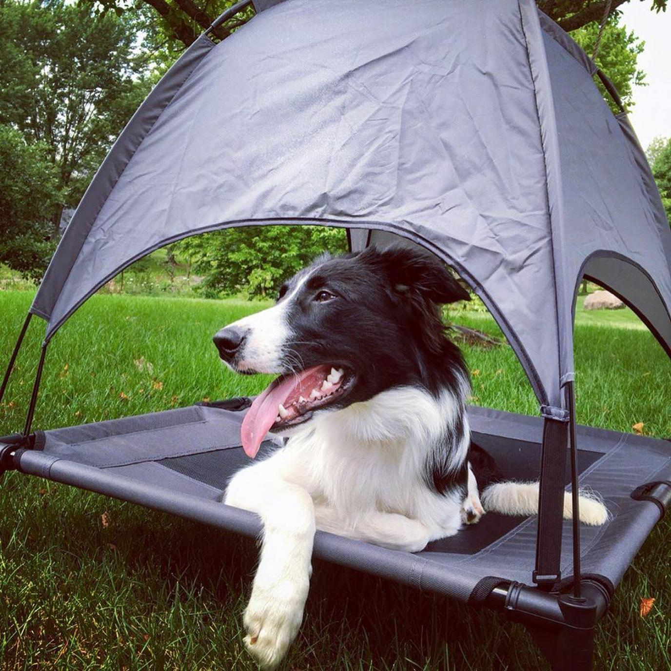 A dog enjoys his elevated and shaded dog bed.