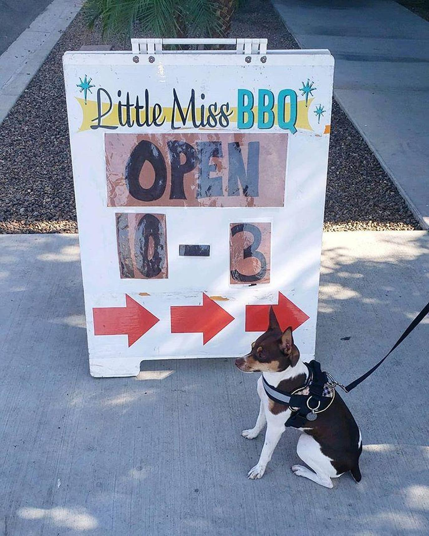 Dog Stands in Front of a Sign for Little Miss BBQ, A Dog-Friendly Barbecue Restaurnt in Phoenix.