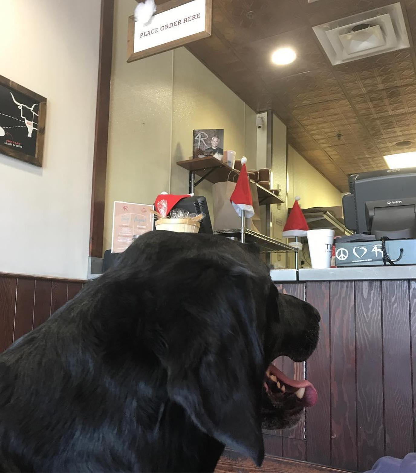 A Labrador Stands at the Register at a Pet-Friendly Barbecue Restaurant in Winter Park.