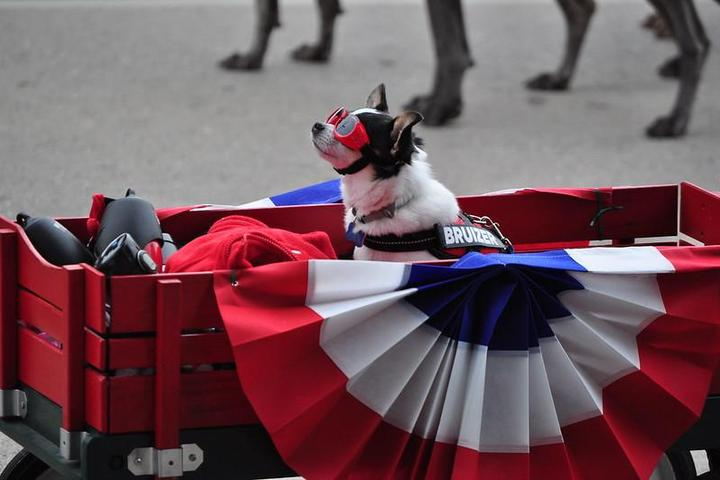 7 Fun (and Safe) Things to Do With Your Dog on July 4th