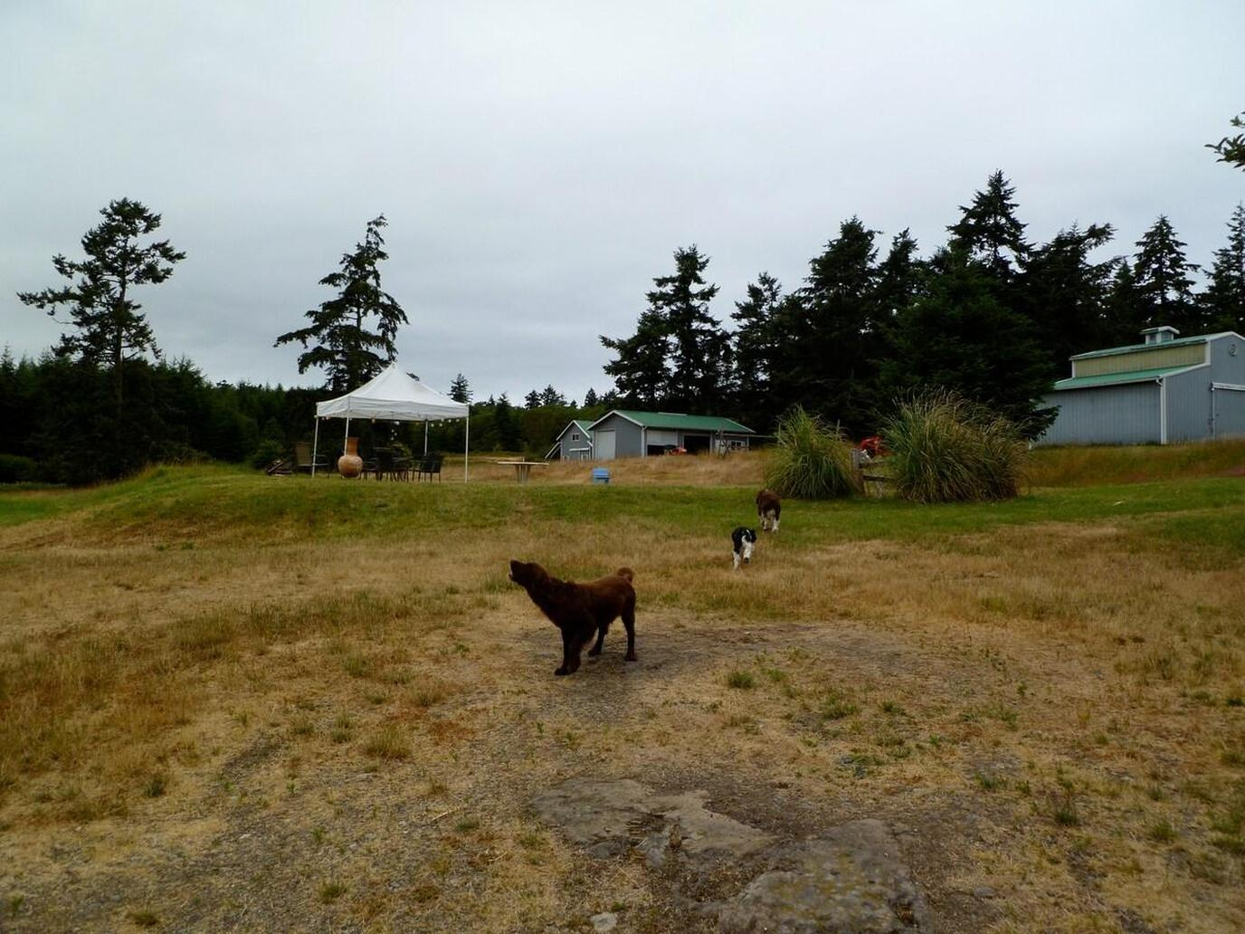 Shot of the Grounds at a Pet-Friendly Airbnb Near San Juan Island National Historic Park.
