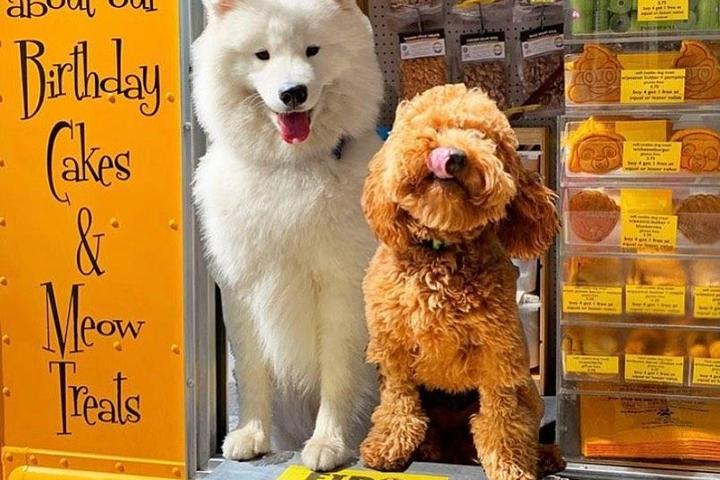 Two dogs on a food truck