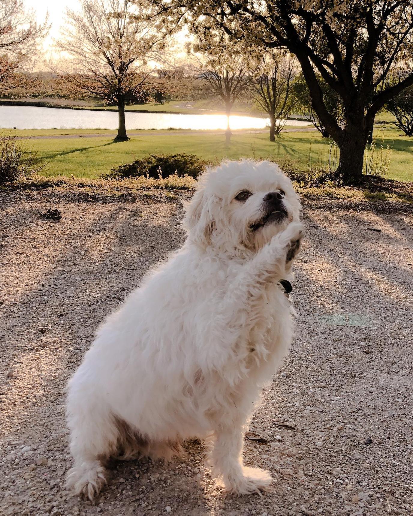 A cute dog enjoying a nice day at a pet-friendly farm.