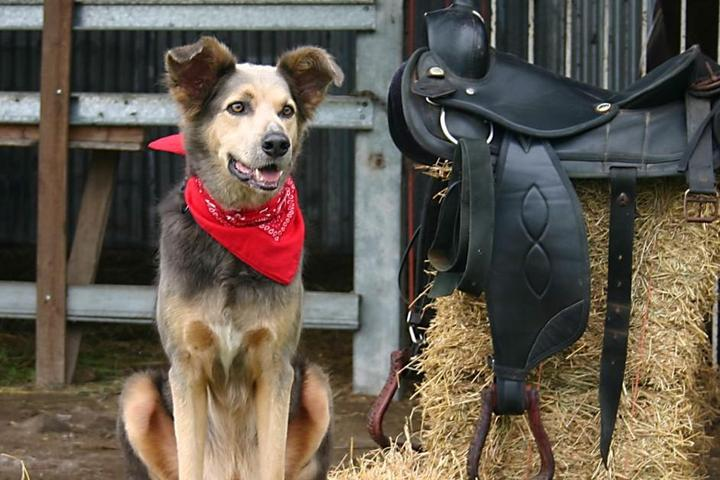 """Calling All """"Farmhounds:"""" 11 Fantastic Pet-Friendly Farm Rentals"""