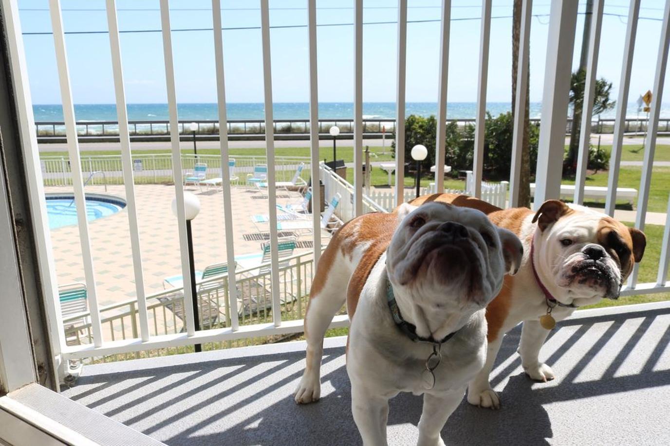Two Dogs taking a suntan at a pet-Friendly Beachfront Rental