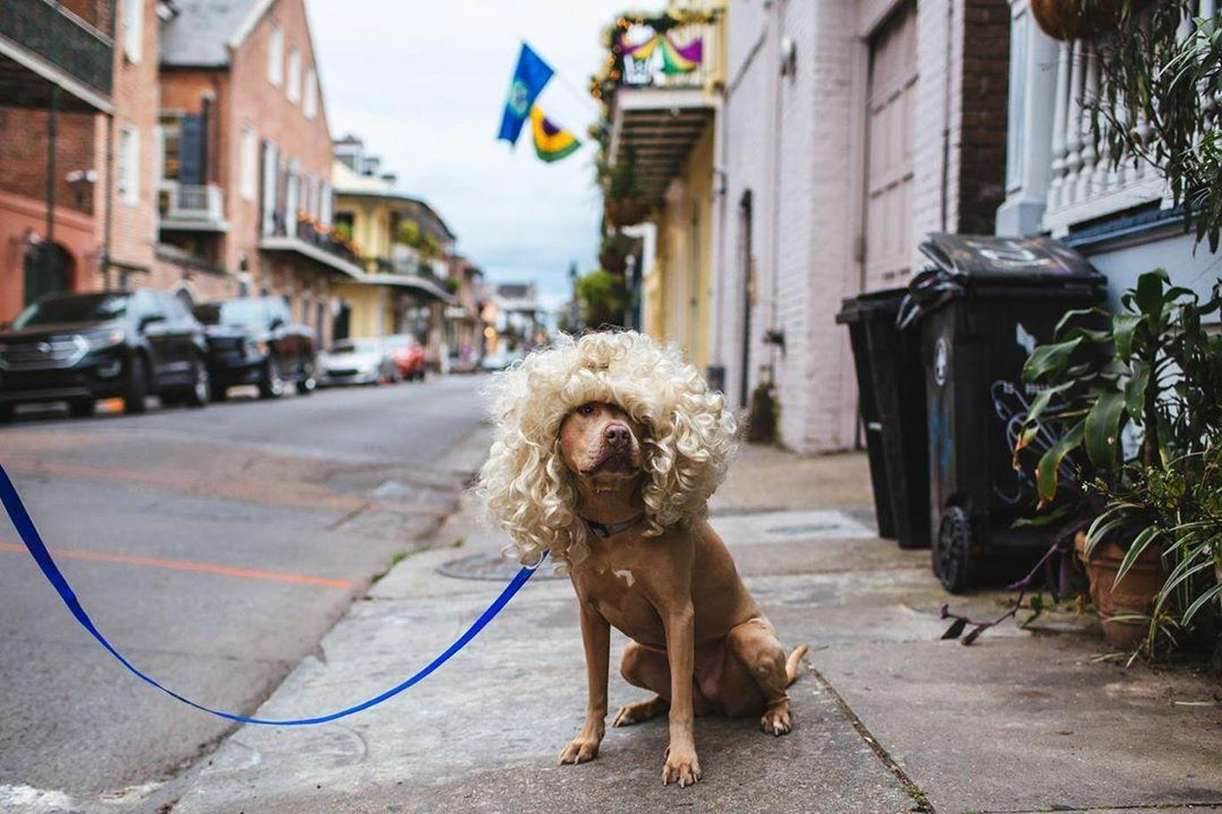 A dog on New Orleans Parade
