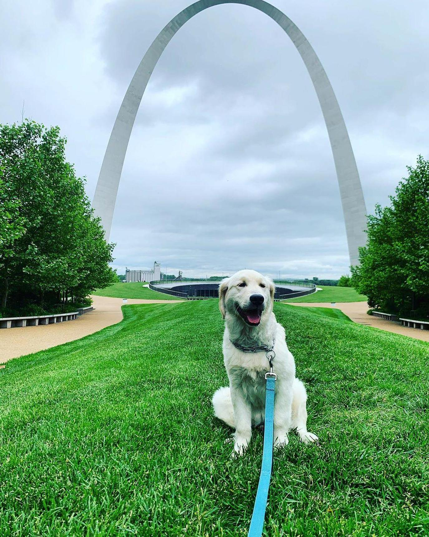 a dog enjoying at the Gateway Arch National Park