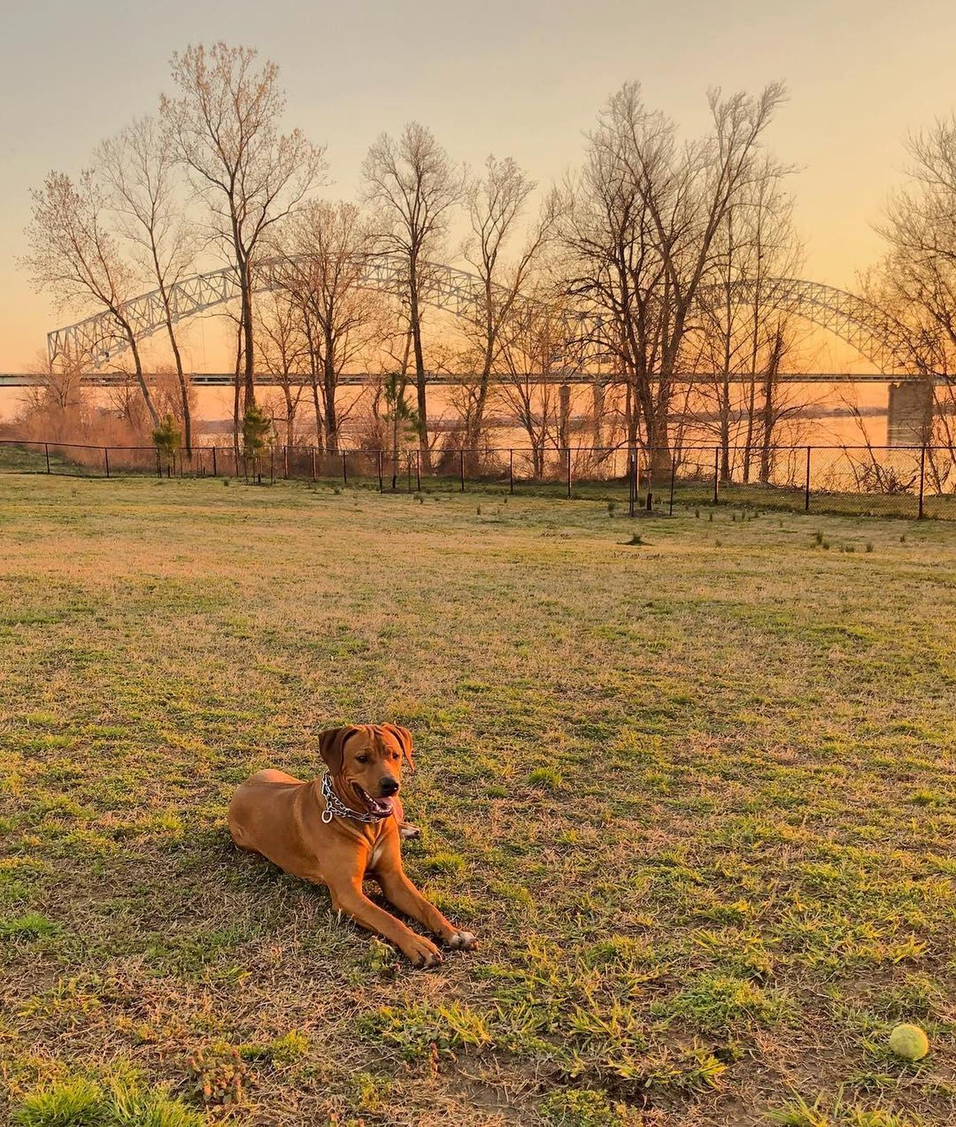 A dog waiting for the sunset at Memphis, Tennessee