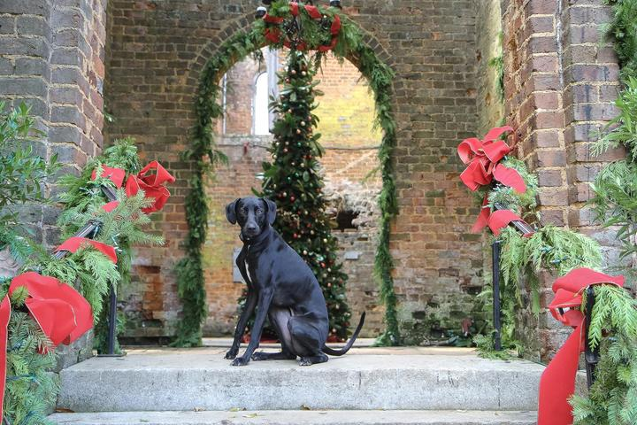 a dog waiting for his christmas gift