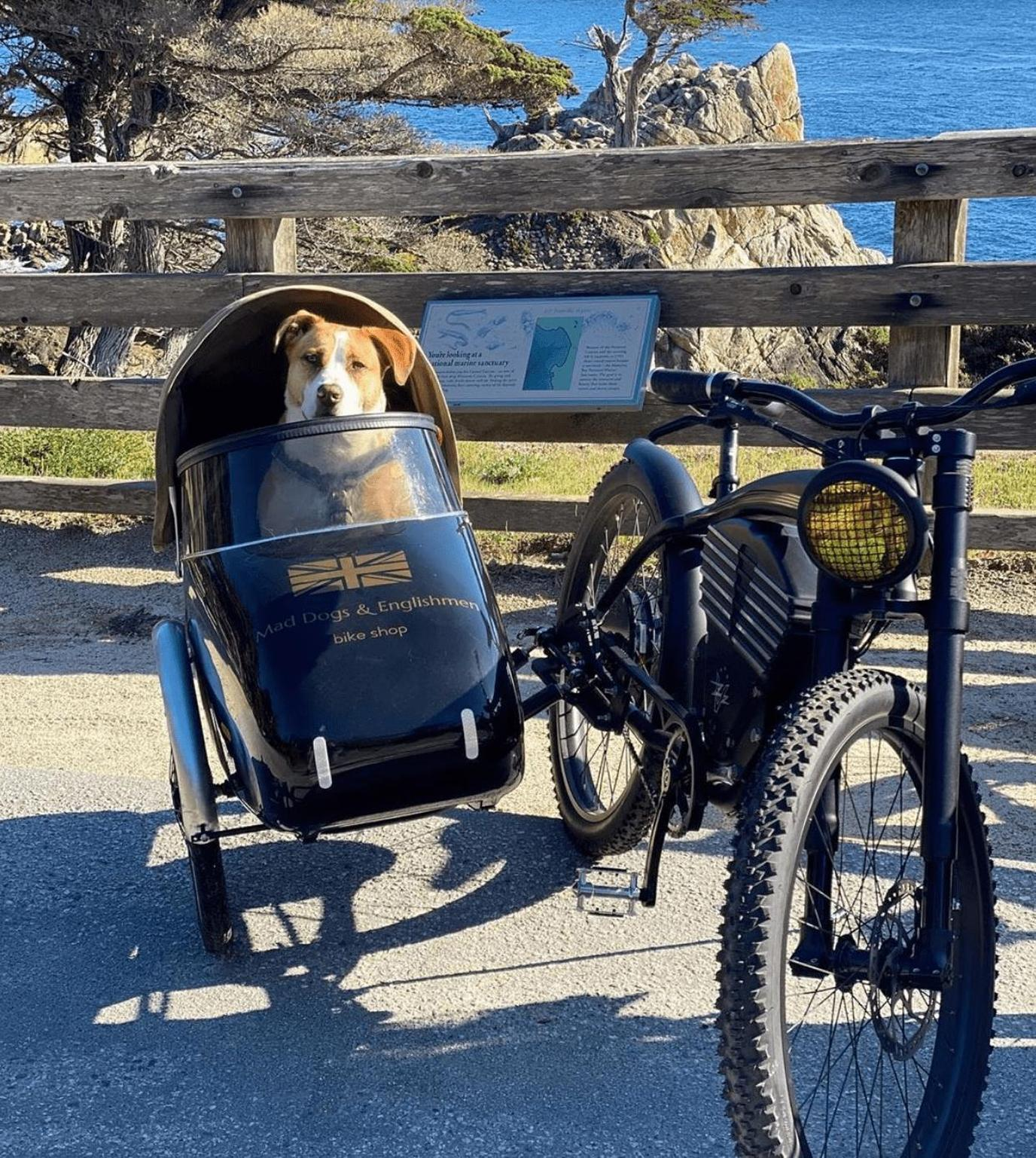 """""""Ruff"""" Riders: The Best Bicycle Accessories for Dogs"""