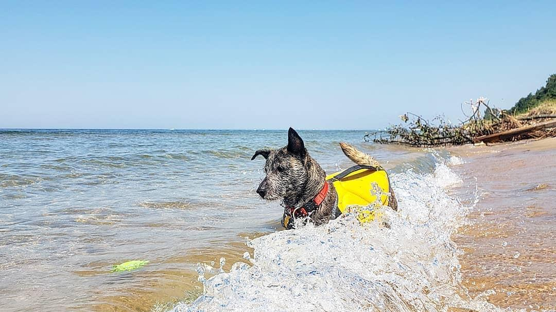Dog Paddle At These Pet Friendly Swimming Holes Bringfido