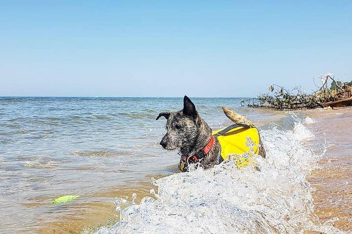 Pet-Friendly Swimming Holes