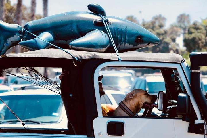 The A1A: A Pet-Friendly Road Trip