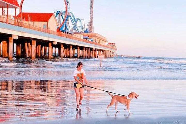 The Gulf Coast: A Weird and Wonderful Pet-Friendly Road Trip