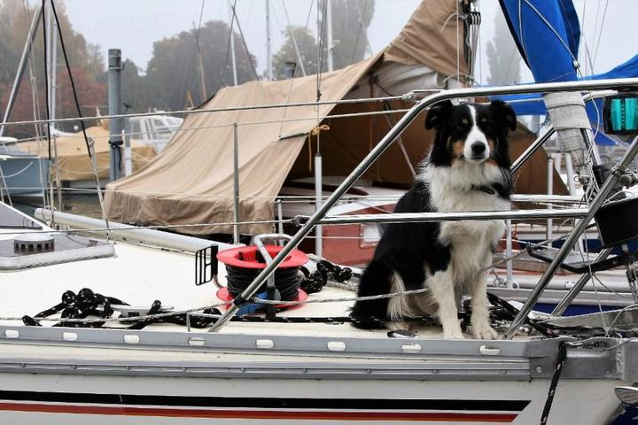 Drift Away With Your Dog on a Pet-Friendly Houseboat