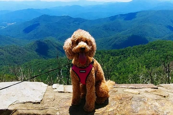 Nantahala National Forest: The Best Dog-Friendly Alternative to the Great Smoky Mountains National Park