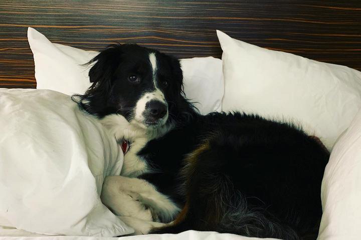 Can I Bring My Dog to Sleep Inn?