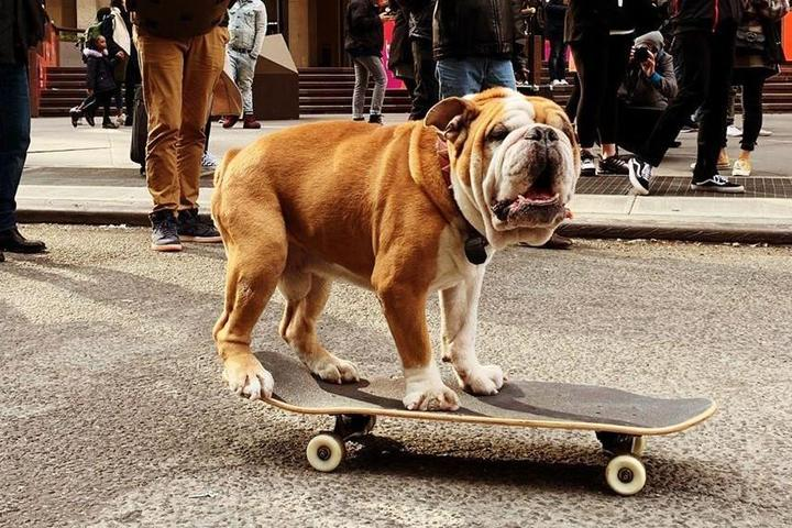 The 10 Most Popular Dog Breeds (and Their Travel Personalities)