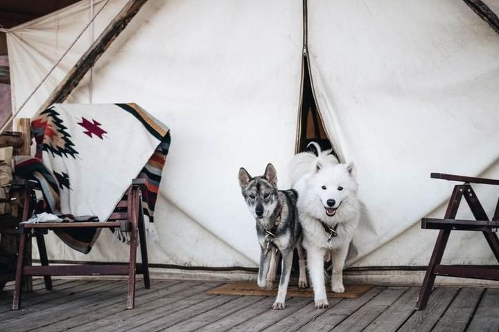 """Why We're """"Mutts"""" About Under Canvas"""