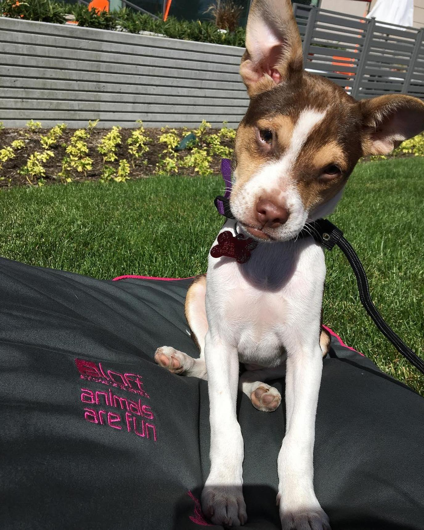 Aloft Boston Seaport welcomes dogs to stay for no pet fee.
