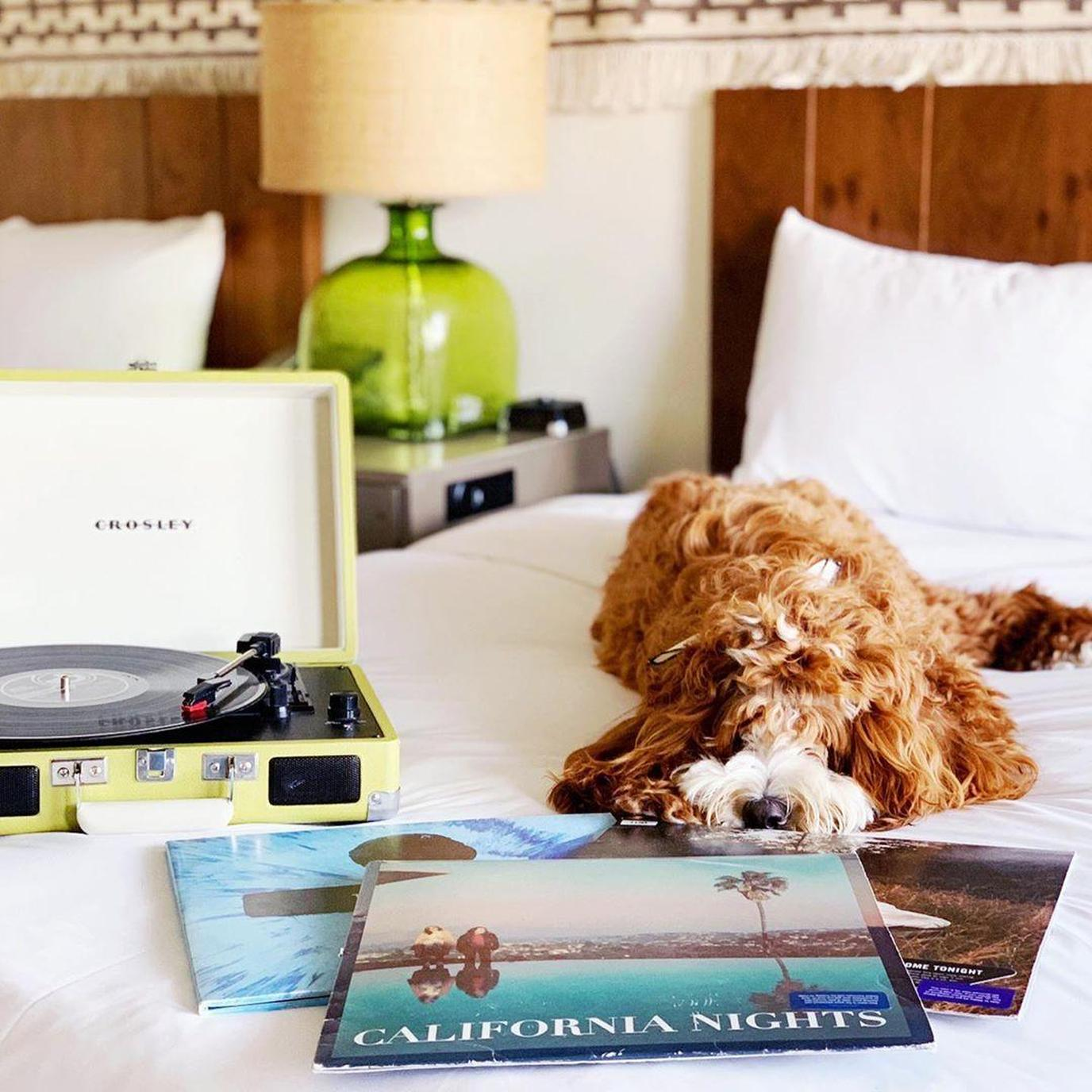 The Goodland, a Kimpton Hotel welcomes dogs for no pet fee.