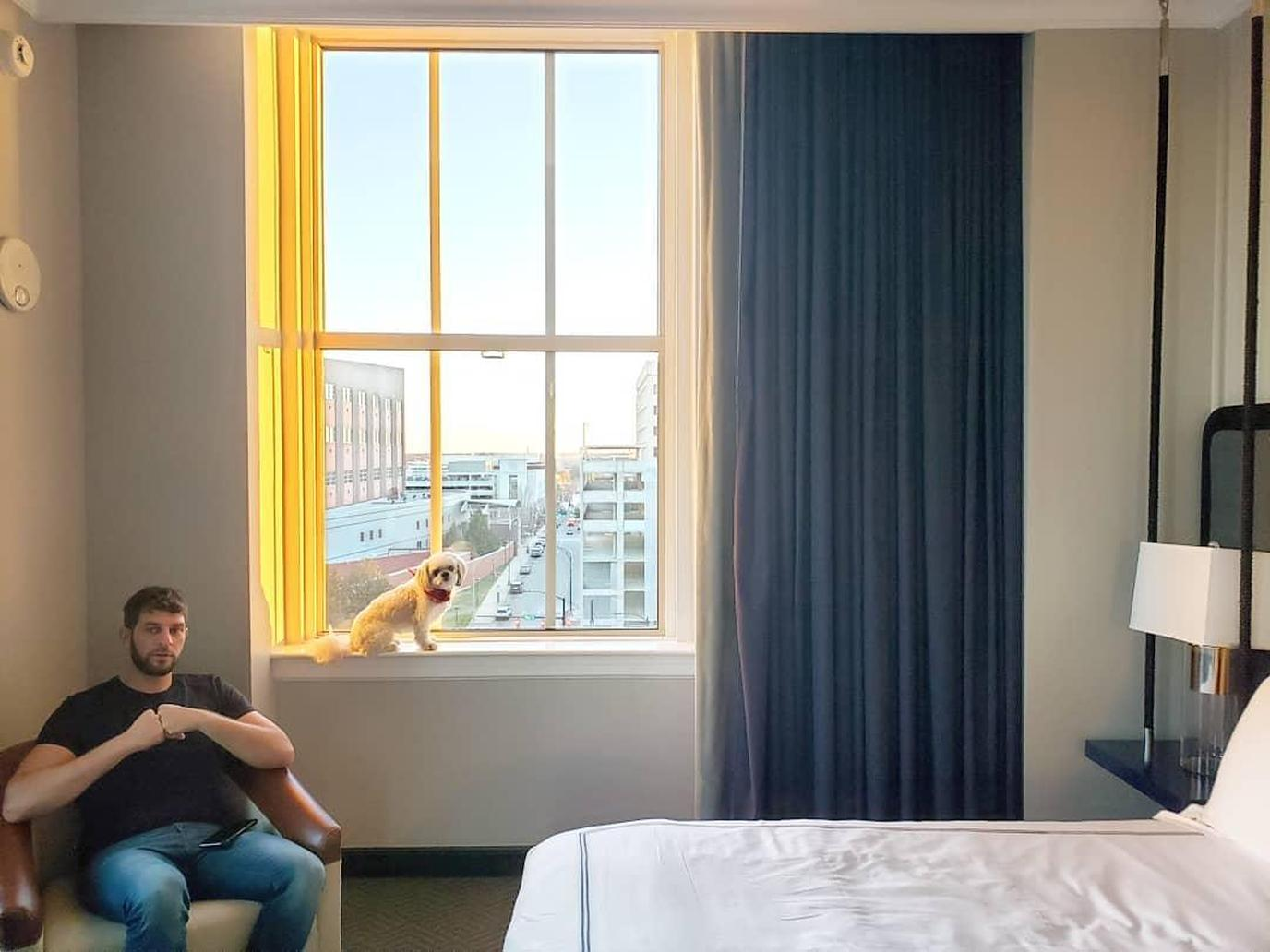 Stay in downtown Winston Salem with your dog at the pet-friendly Kimpton Cardinal Hotel.
