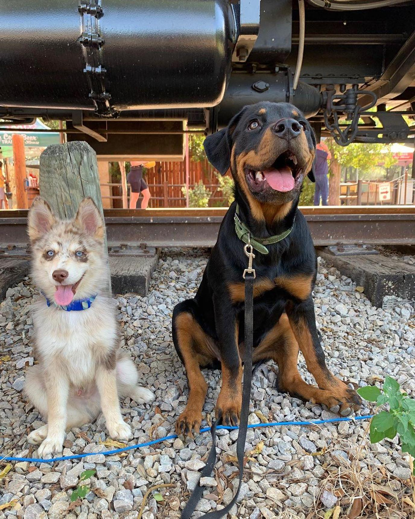 two dogs having fun at Katy Trail