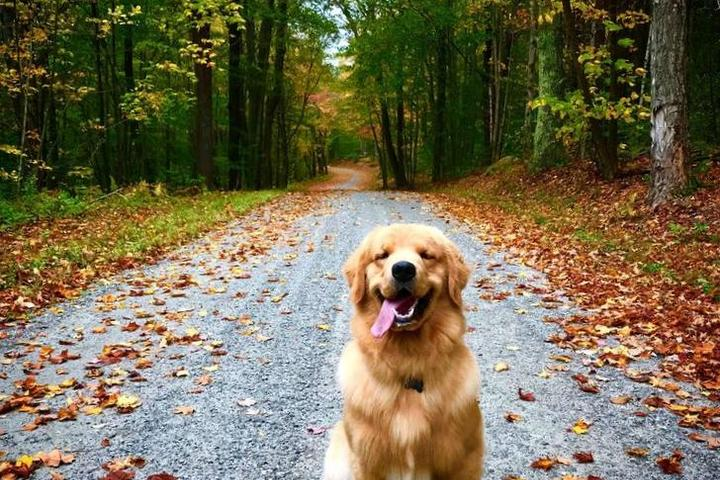 Pet-Friendly Vacation Rentals With Spectacular Fall Foliage Views.