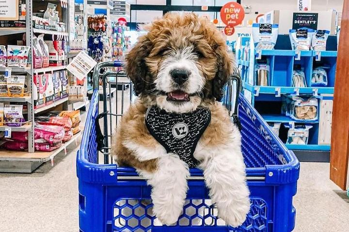 Pet-Friendly Chain Stores in the U.S.