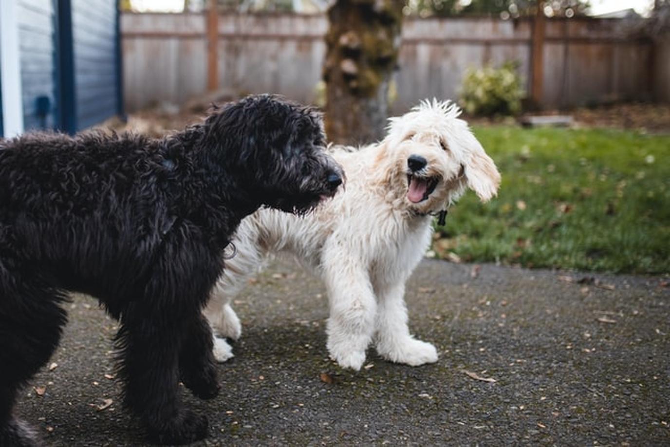 two dogs walking on the Neighborhood