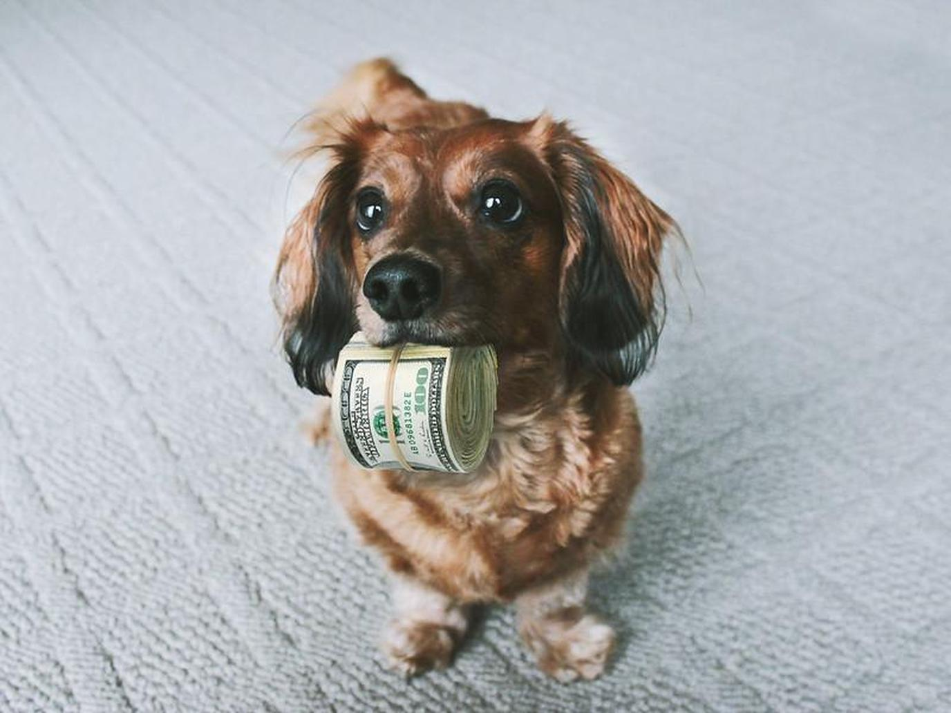 A dog with money