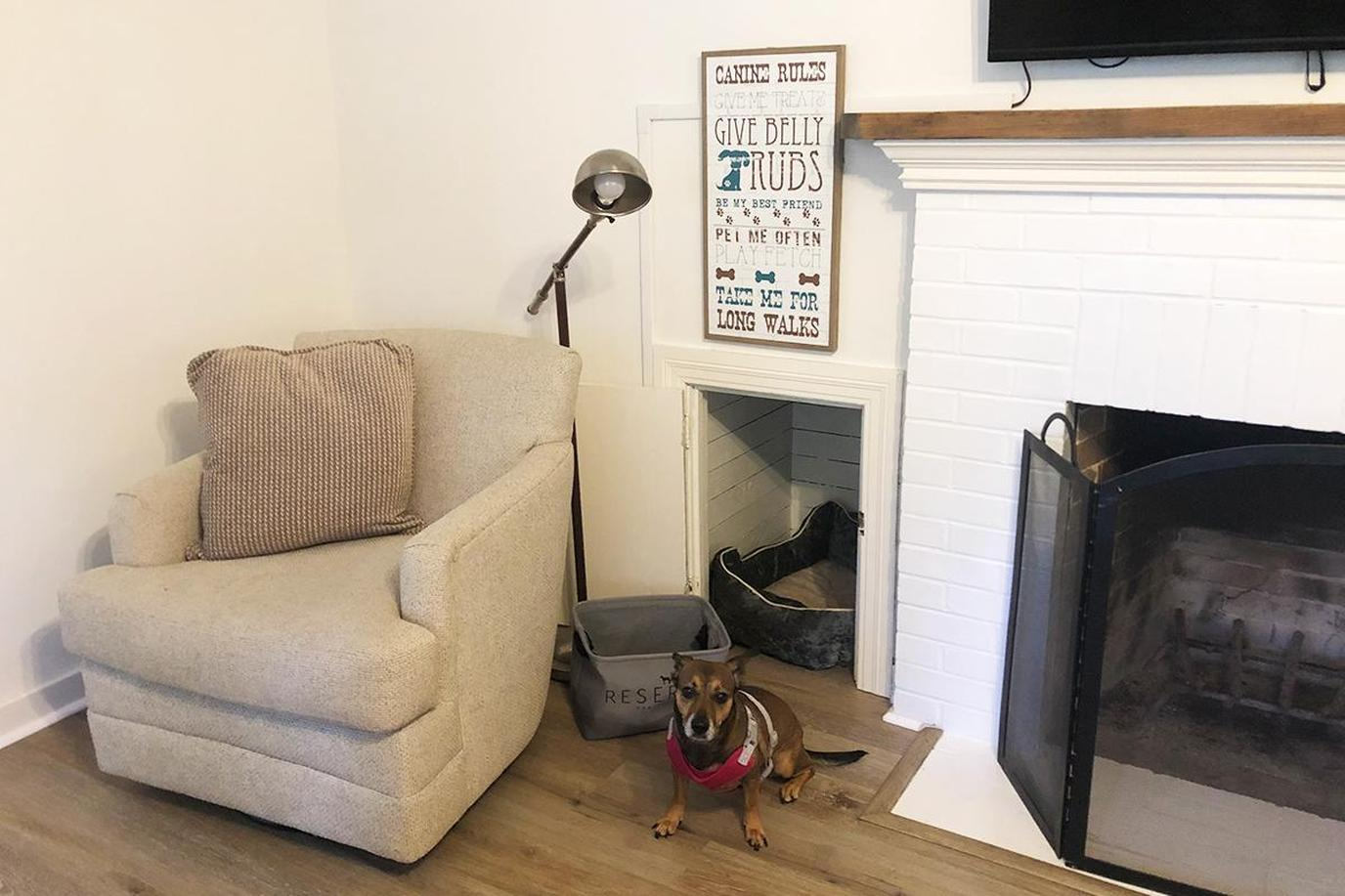 a dog on a vacation rental