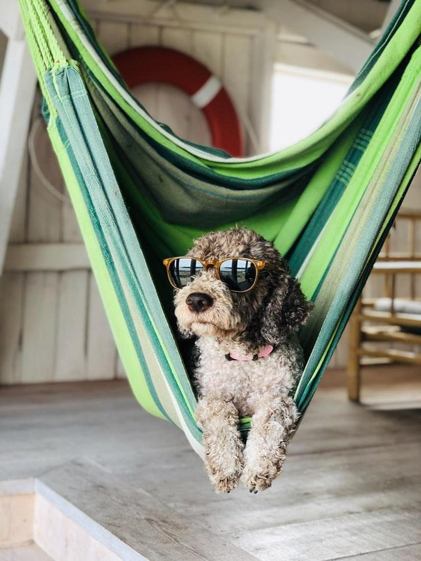 a dog chilling out
