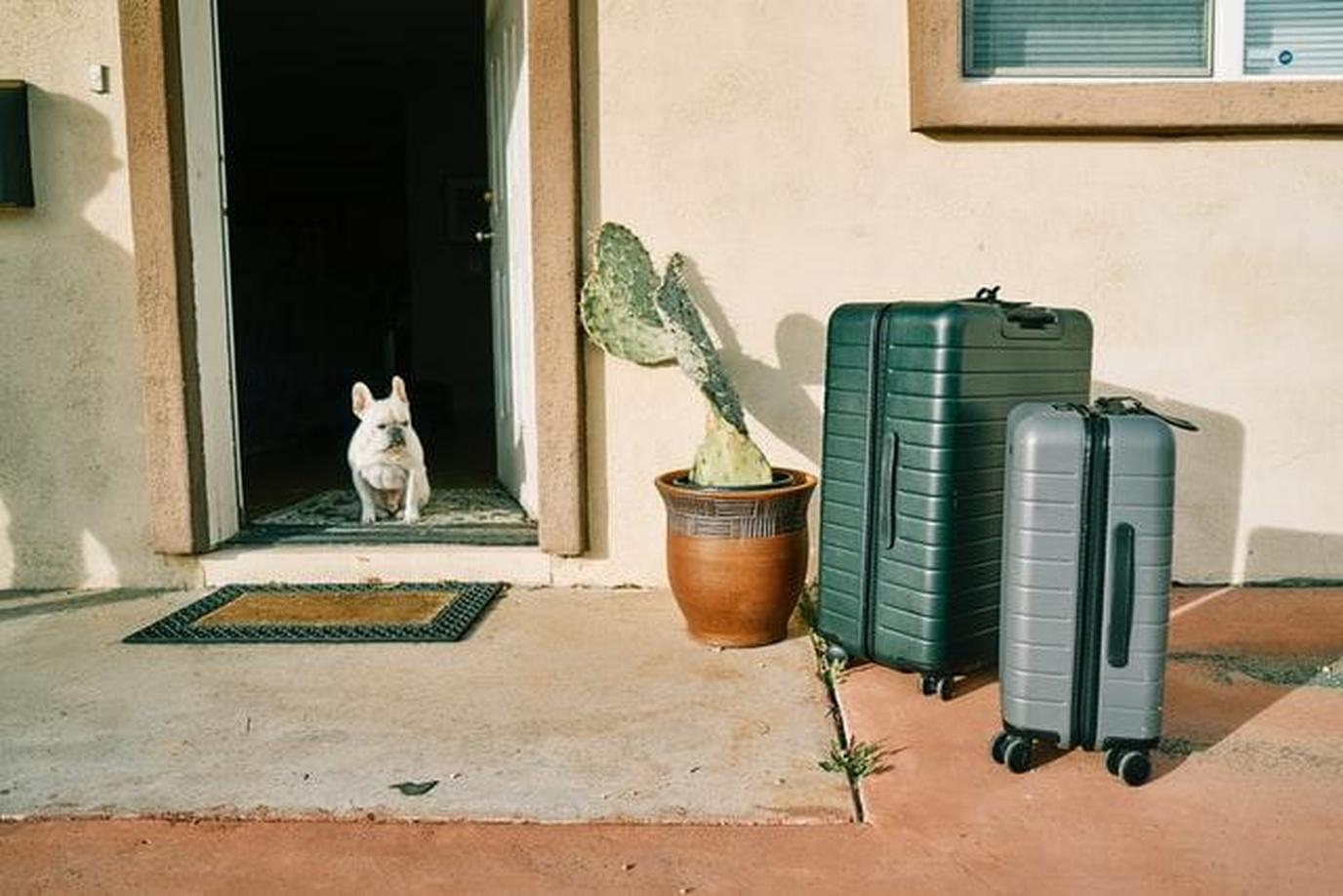 a dog and his suitcases