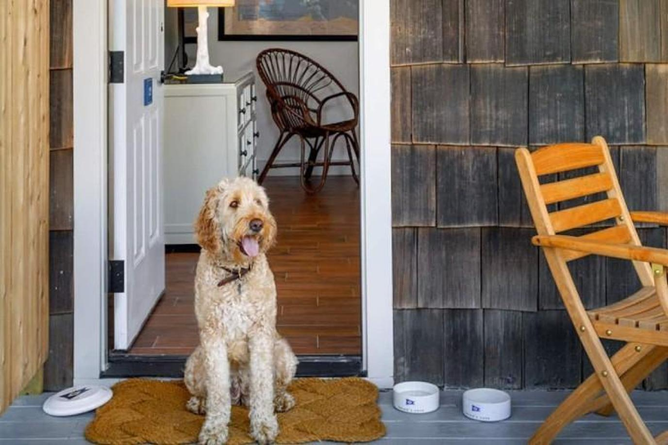 a dog at the door of a house