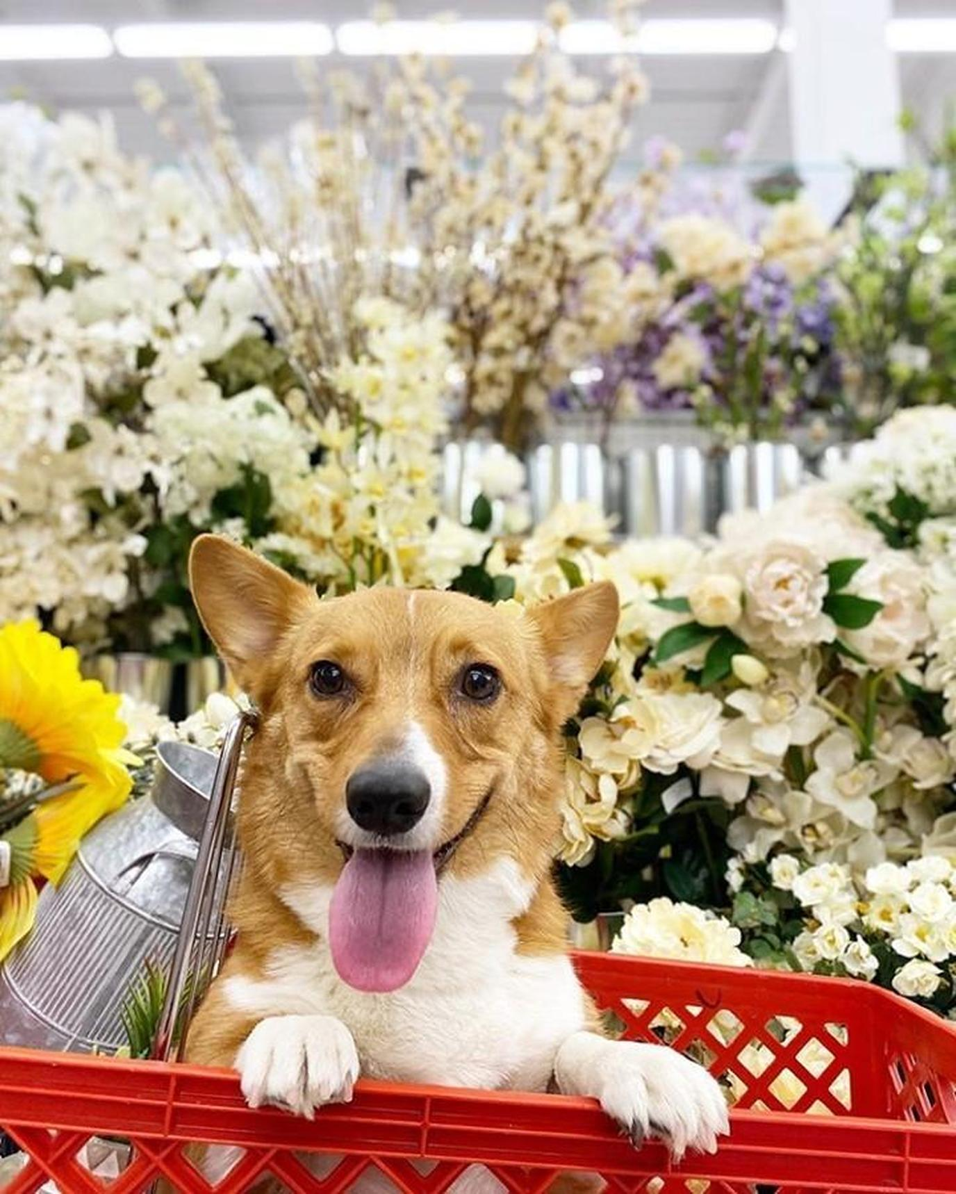 This fall take your dog to shop at one of the pet friendly stores.