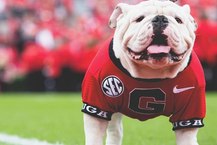 10 Things Uga (and Other Mascots) Can Do on Gamedays This Football Season