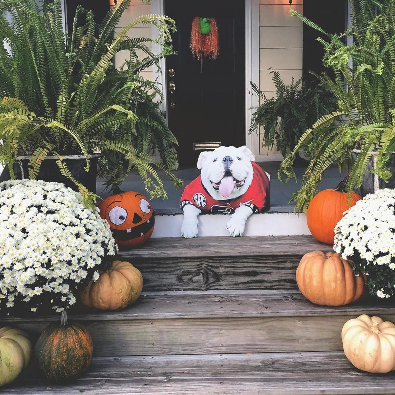 Fall is the perfect time of year to capture some new festive photos of your dog.