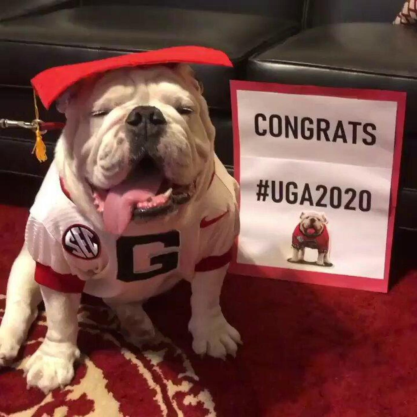 Uga X could go back to dog school this fall since he won't be at the college football games.