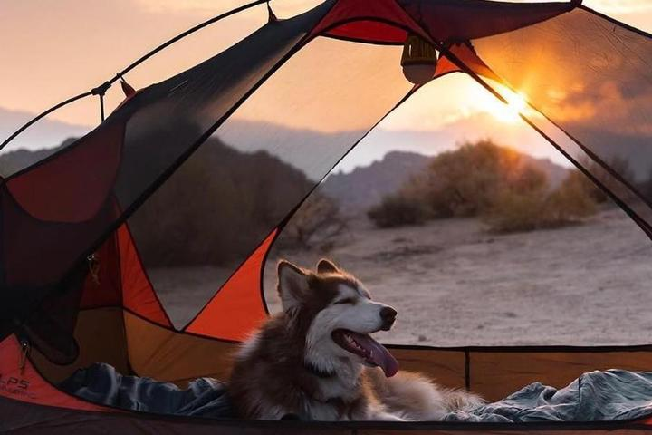 "7 Pet-Friendly Campsites For Leaf ""Puppers"""